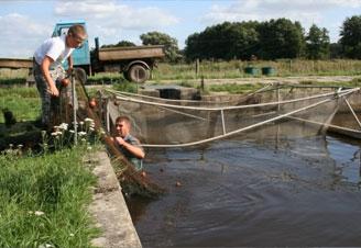 Teichwirtschaft Fischzucht